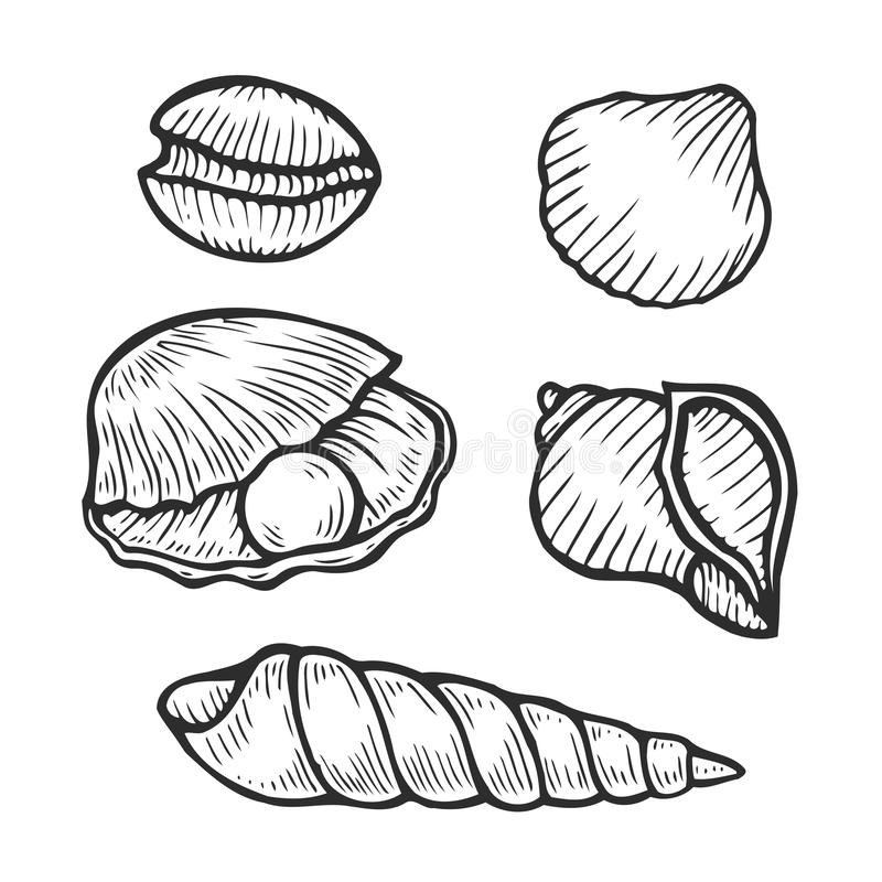 Set of seafood icons. Hand drawn set of seashell icons. Isolated clams. Vector Engraved art. Delicious marine food menu sketched objects. Use for restaurant vector illustration