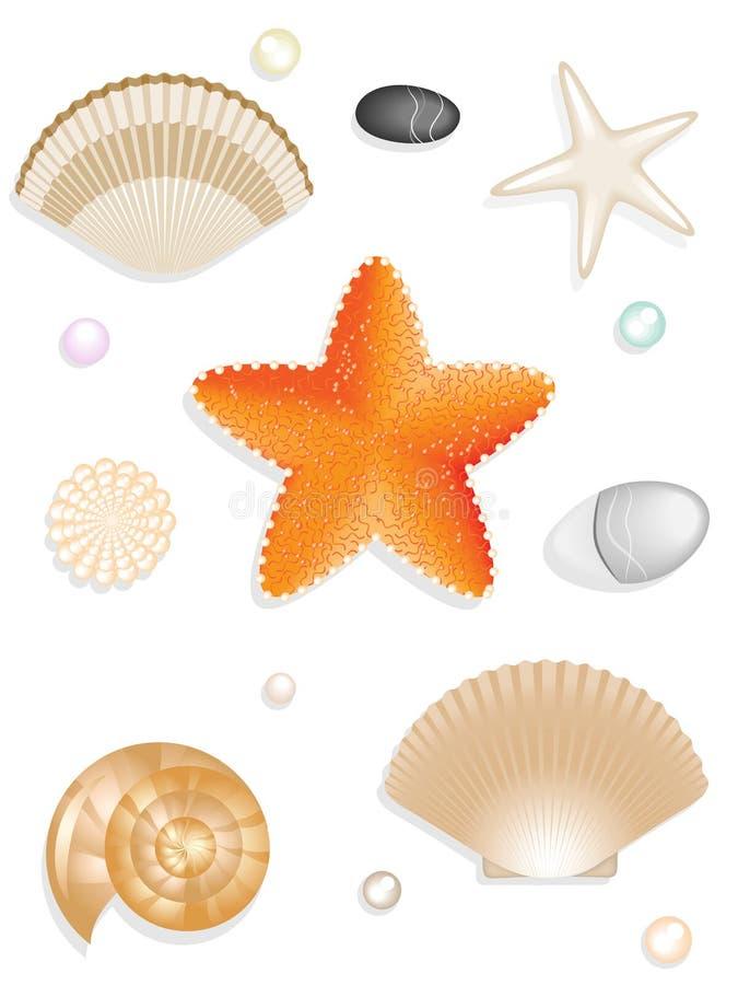 Set of seashells, seastar, stones vector illustration