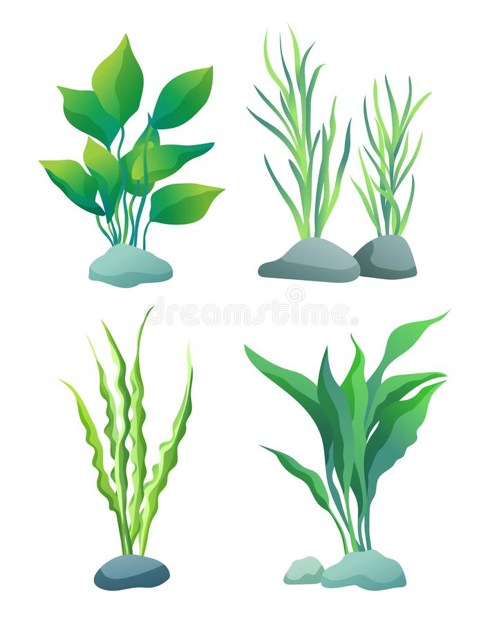 Seaweed or Algae Variegarion Illustration Set. Set of seaweed including wide and thin, wavy and straight water plants for aquarium decoration. Color flat vector vector illustration