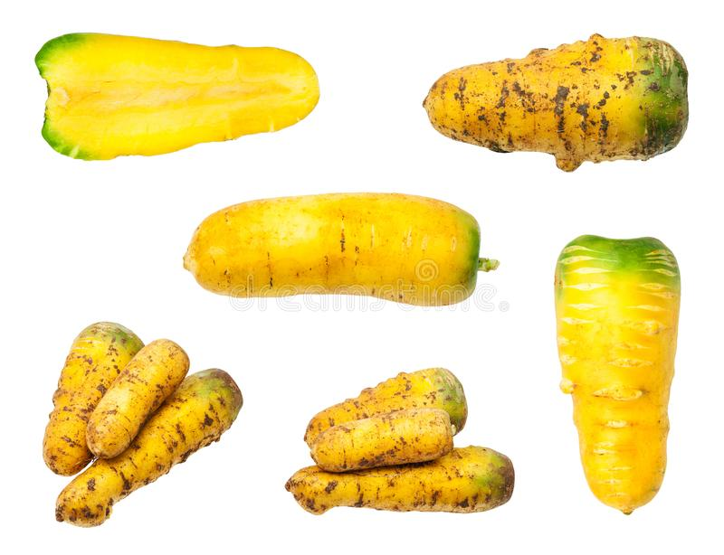 Set of several organic yellow carrots isolated stock photography