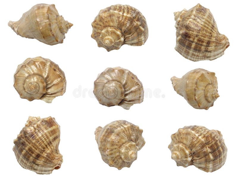 Download Set Of Shells Of Marine Molluscs Stock Photo - Image: 11128464
