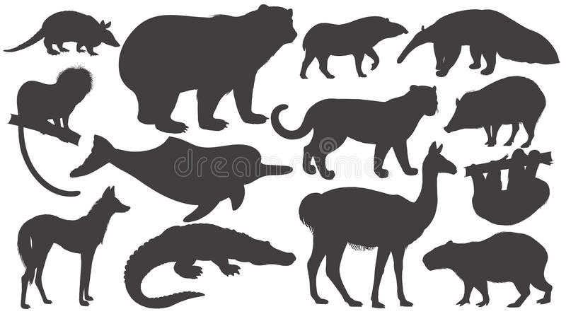 Set of silhouettes animals of South America. Black silhouettes animals of South America on white background set. Vector illustration art vector illustration