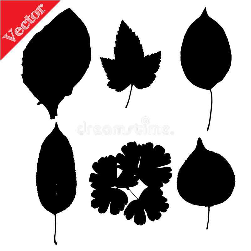 Set of silhouettes of leaves vector illustration