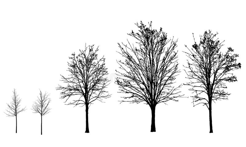 Set of silhouettes of trees without leaves in autumn and royalty free illustration