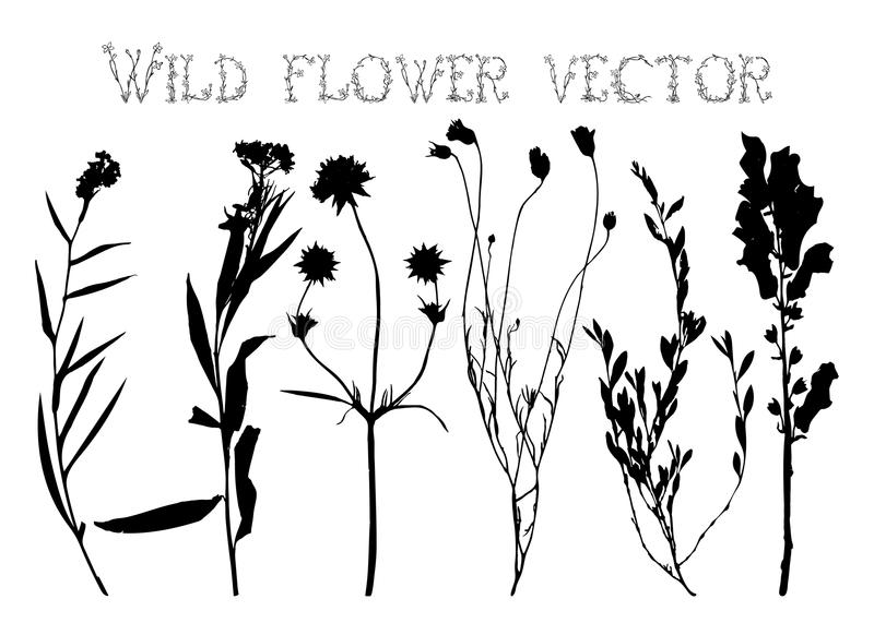 Line Drawing Flower Vector : Set silhouettes of wild flowers vector stock illustration