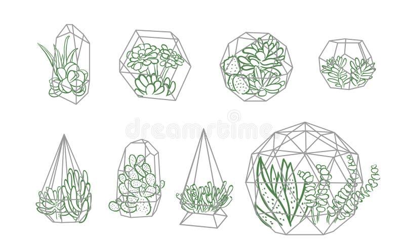 Set of simple geometric terrariums with plants. geometric terrariums with succulents & cactus. vector illustration