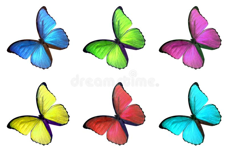 Set of six colorful butterfly on white background vector illustration