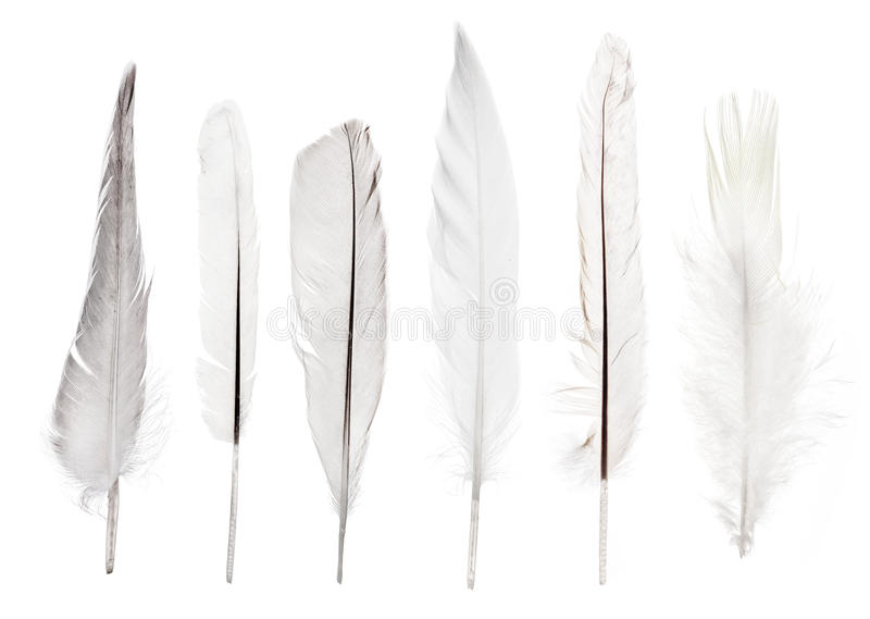 Set of six straight light feathers isolated on white. Set of six feathers isolated on white background stock image
