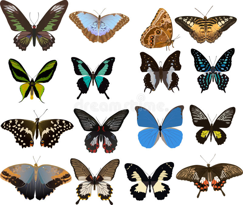 Download Set Of Sixteen Color Butterflies Royalty Free Stock Images - Image: 16279189
