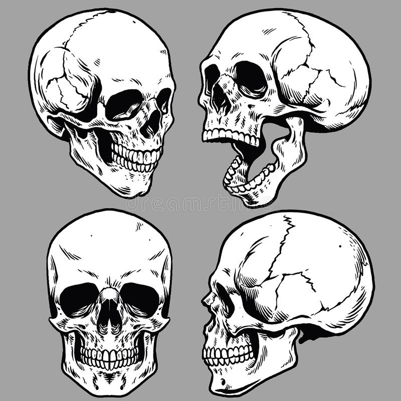 Set of skull in hand drawing style. Vector of set of skull in hand drawing style royalty free illustration