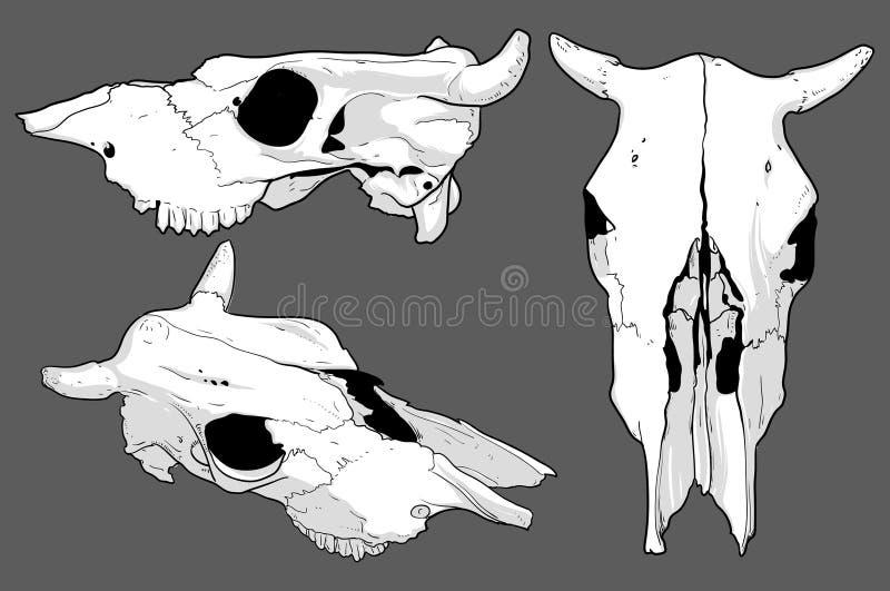 Set Of Skulls Cow Stock Vector