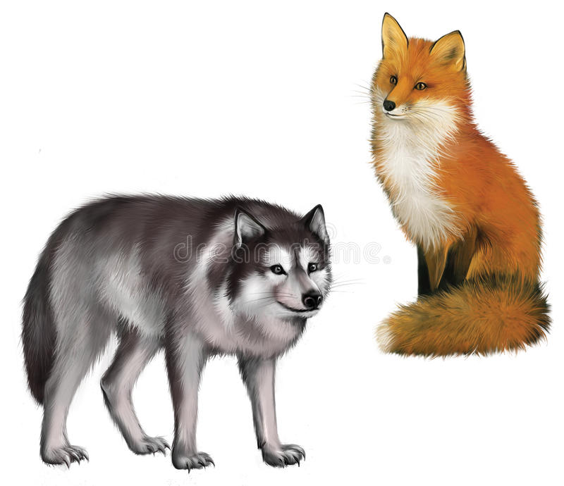 Sitting Fox and Wolf. Isolated realistic illustrat. Ion on white background stock illustration