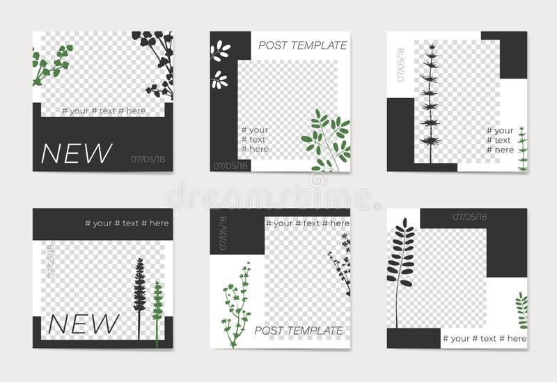 A set of social media post templates. For personal and business accounts. Silhouettes of plants on black and white background. With place for your foto vector illustration