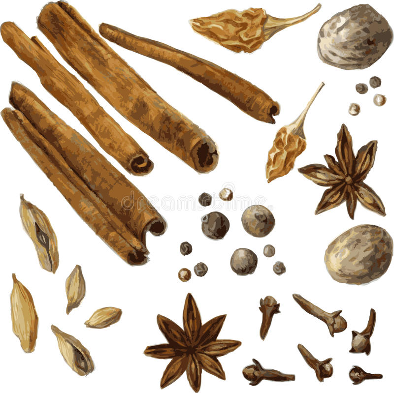 Set of spice, drawing by watercolor stock illustration