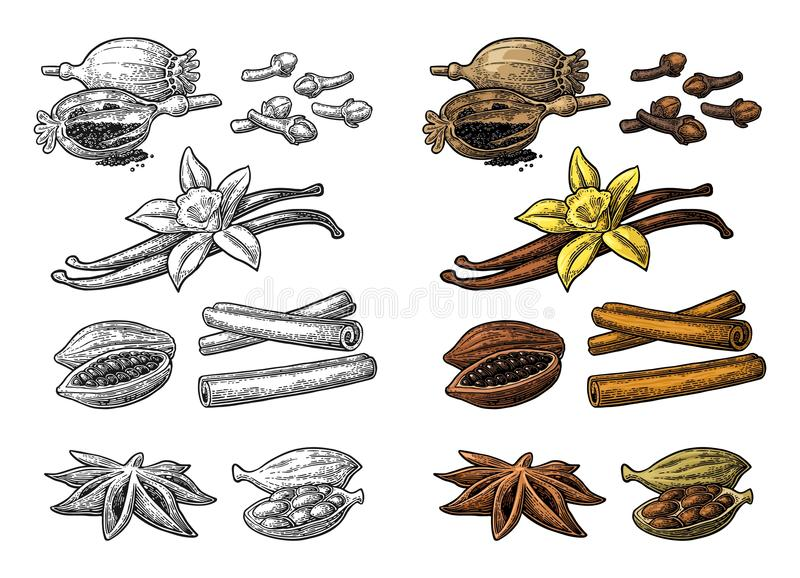 Set of spices. Anise, cinnamon, cocoa, vanilla, poppy. Set of spices. Anise star, cardamom, clove, cinnamon stick, fruits of cocoa beans, vanilla stick and vector illustration