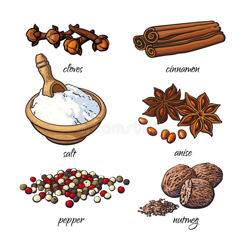 Set of spices - cinnamon, pepper, anise, nutmeg, salt, clove. Isolated sketch style vector illustration on white background. Traditional cooking spices in stock illustration