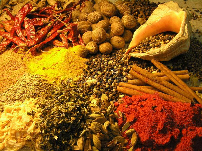 Set of spices. stock photos