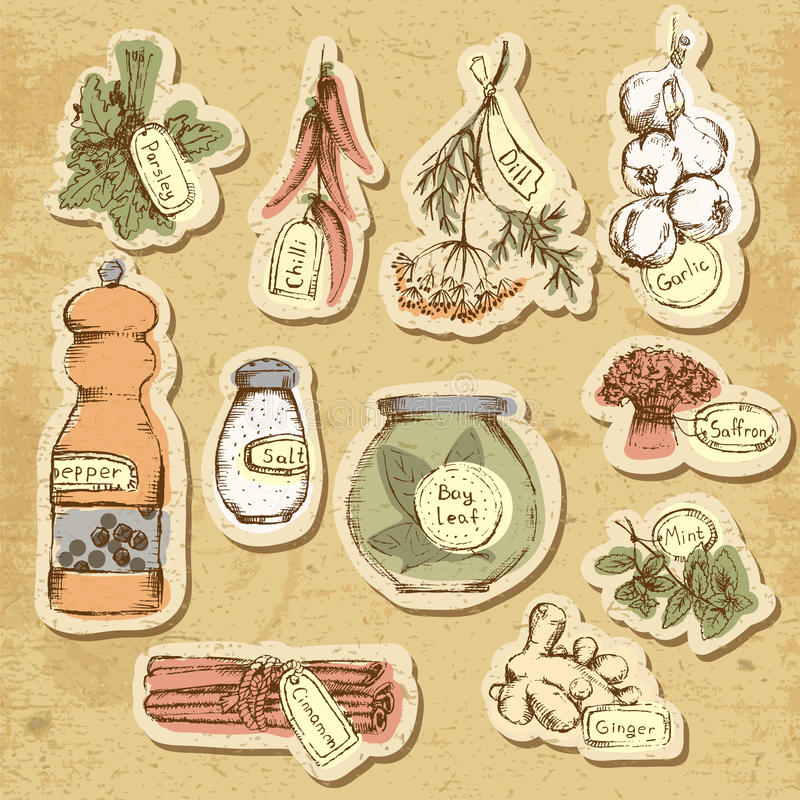 Set of spices and herbs. Vector Illustration vector illustration