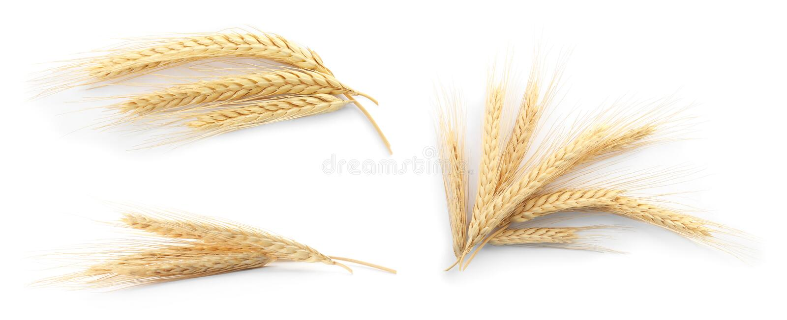 Set with spikelets on white background royalty free stock photography