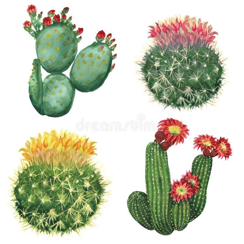 set spiny suckulent typ för kaktusväxt royaltyfri illustrationer