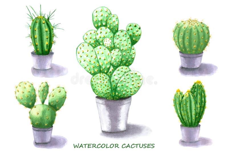 set spiny suckulent typ för kaktusväxt för flygillustration för näbb dekorativ bild dess paper stycksvalavattenfärg stock illustrationer