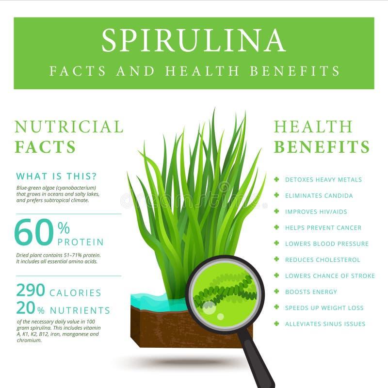 Set spirulina alg infographics sztandar Arthrospira gałęzatka ilustracji