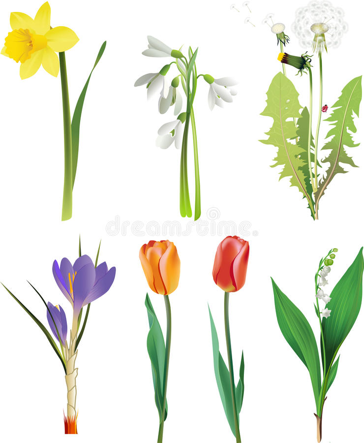 Set of spring flowers. stock illustration