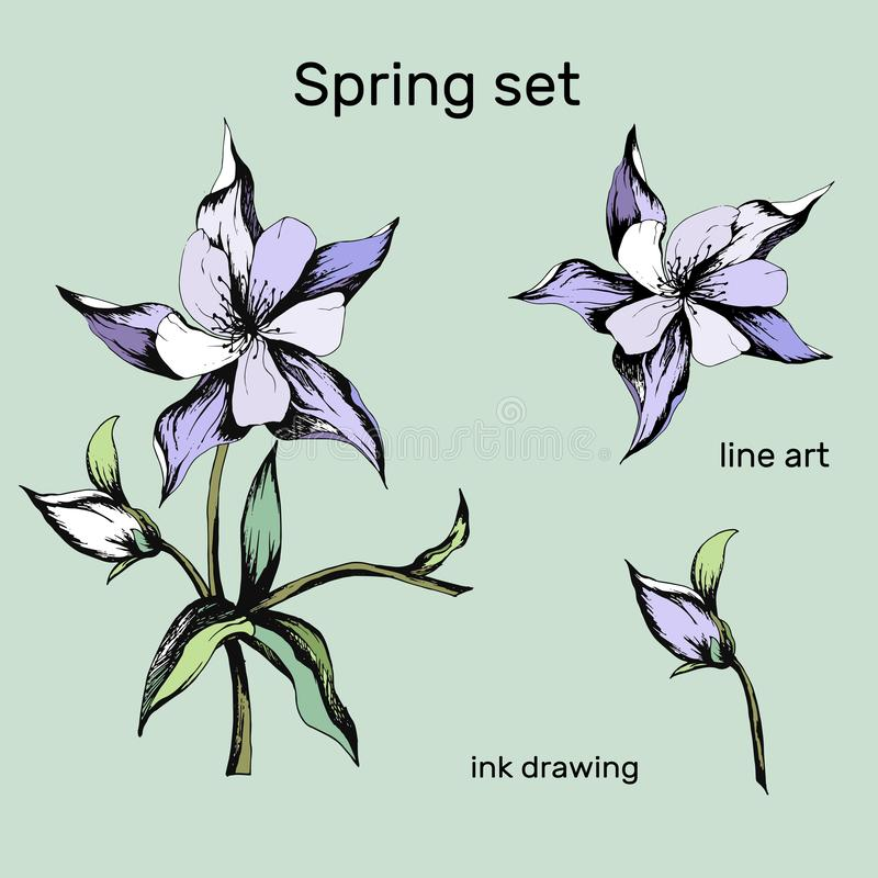 Set of spring flowers of pink and purple on a white background. Aquilegia. Spring bouquet drawn by hand vector illustration