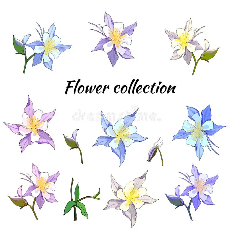 Set of spring flowers of pink and purple on a white background. Aquilegia. Vector illustration drawn by hand royalty free illustration