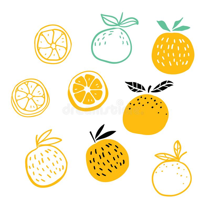 Set of oranges fruits vector illustration royalty free illustration