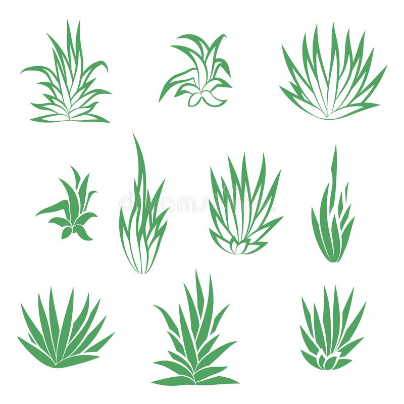 Set of succulent plant, flower isolated vector illustration