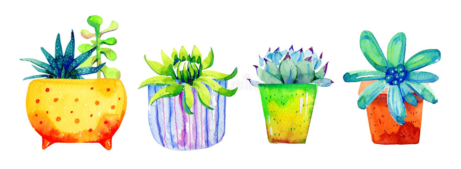 Set of succulents in flowerpots. Watercolor hand drawn color sketch illustration stock images