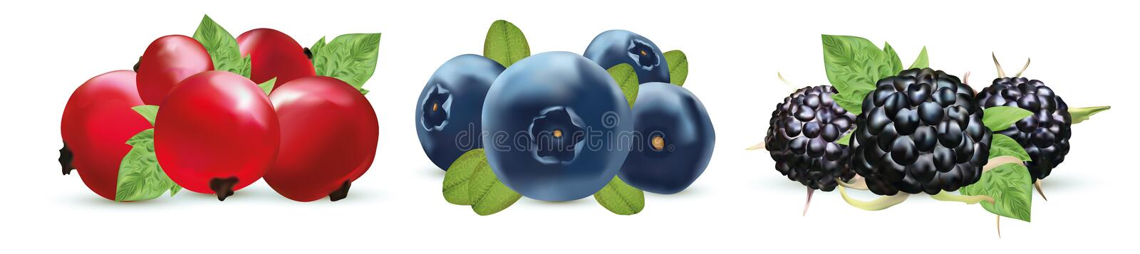 Set summer berry.Blueberry, blackberry and red currant berry with green leaf isolated on white background. 3d realistic. Berry. Vector illustration stock illustration