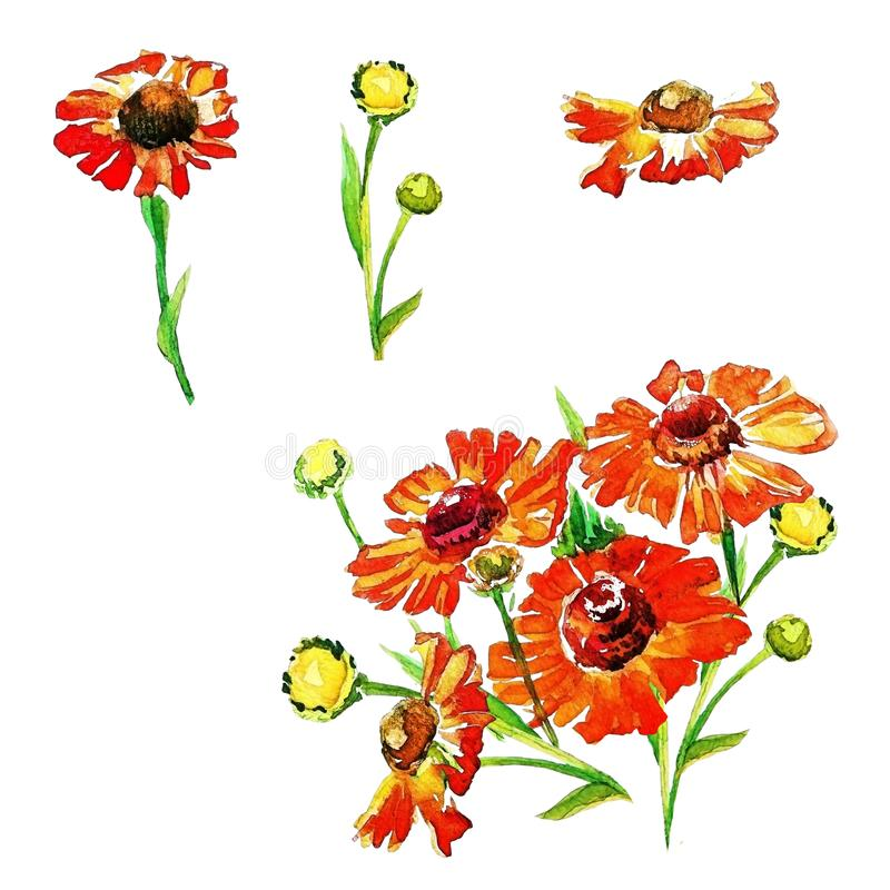 Set of summer flowers painted with watercolors stock illustration