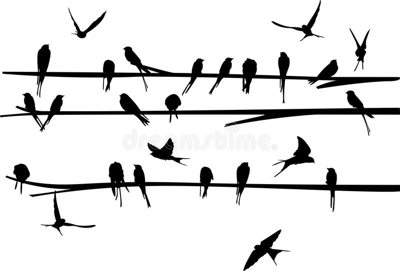Set of Swallow stand and fly around the branch vector illustration