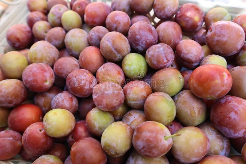 Set of sweet summer fruits.  Small plums just picked from the tree. stock image