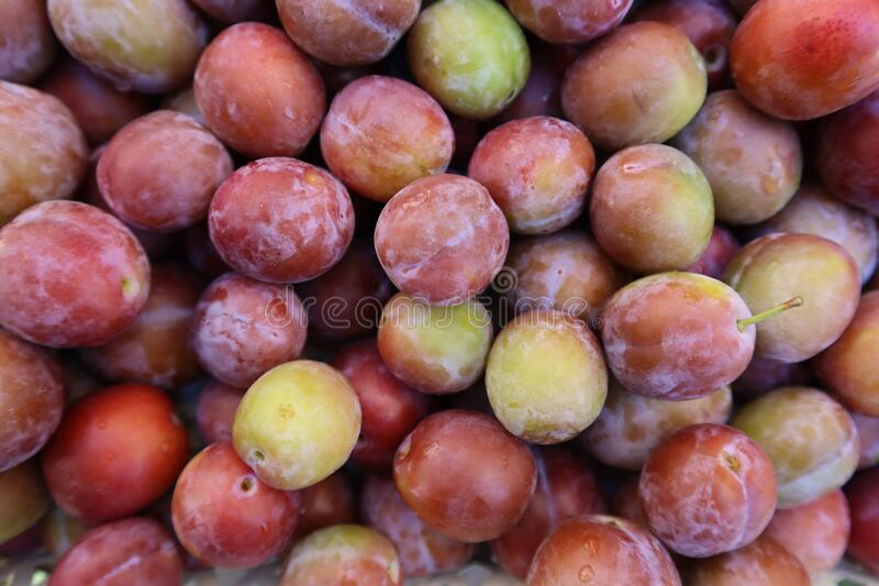Set of sweet summer fruits.  Small plums just picked from the tree. royalty free stock photos