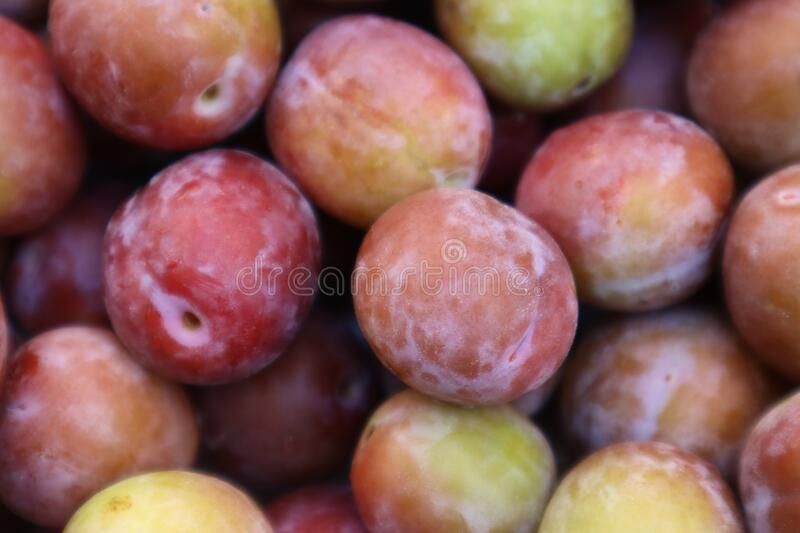 Set of sweet summer fruits.  Small plums just picked from the tree. stock photo