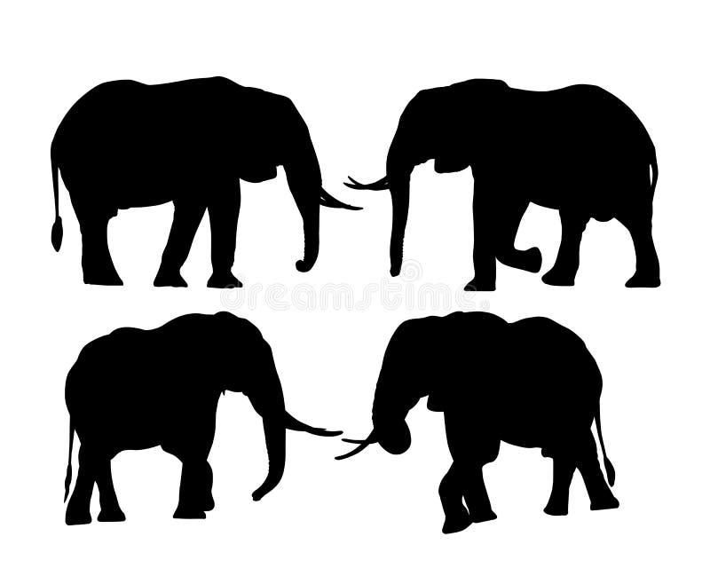 Set sylwetki słonie w safari, odizolowywać na białym tle, wektor royalty ilustracja