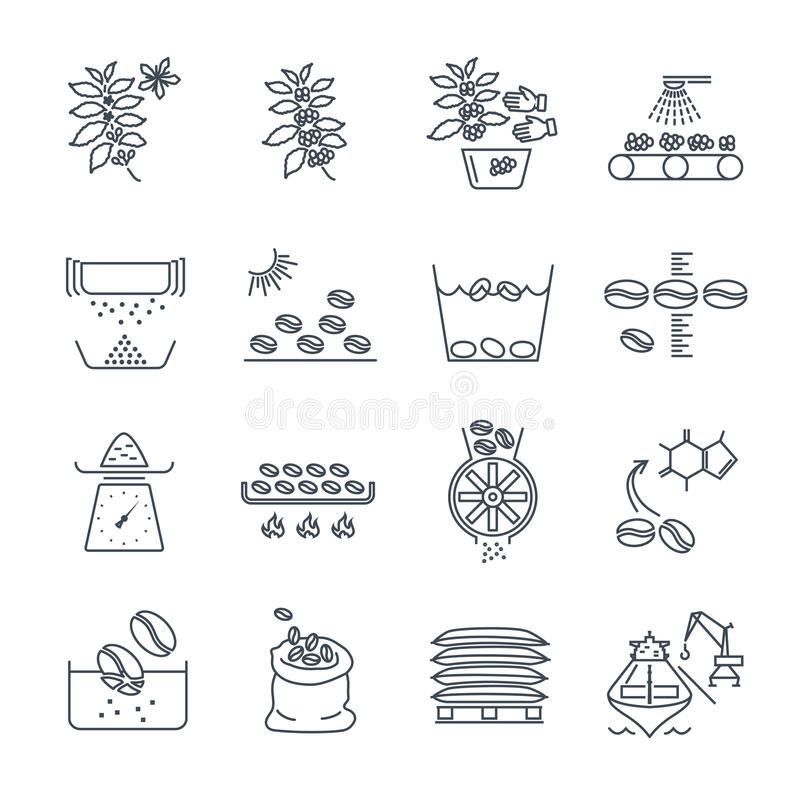 Set of thin line icons coffee production vector illustration