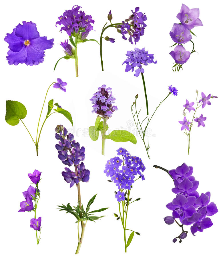 Set of thirteen lilac flowers isolated on white royalty free stock photography