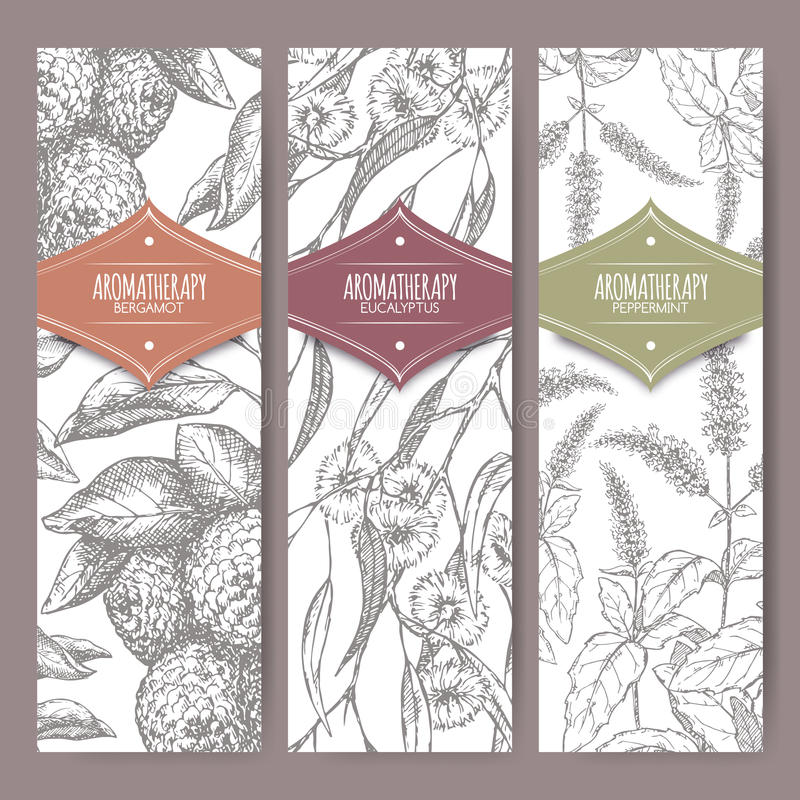 Set of three labels with bergamot, peppermint and eucalyptus sketch. Aromatherapy series. Great for traditional medicine, perfume design, cooking or gardening royalty free illustration