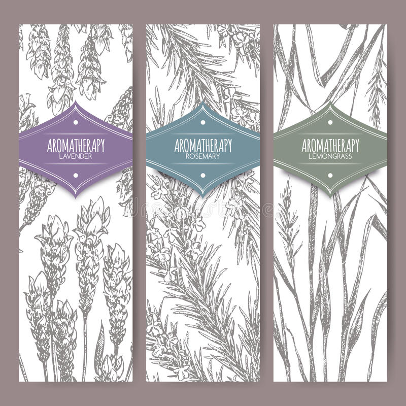 Set of three labels with lavender, rosemary and lemongrass. Aromatherapy series. Great for traditional medicine, perfume design, cooking or gardening labels stock illustration