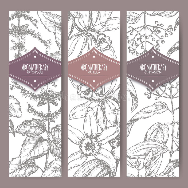 Set of three labels with patchouli, vanilla and cinnamon. Aromatherapy series. Great for traditional medicine, perfume design, cooking or gardening labels royalty free illustration