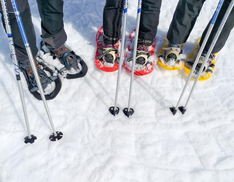 set of three pairs of snowshoes or rackets of snow and two ski poles of a group of sport people on the snow ready to walk on the royalty free stock photo