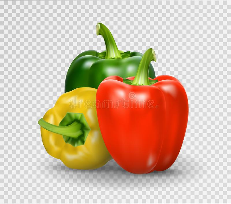 Set of three peppers. Yellow, red and green pepper. Realistic Vector illustration of paprika. Set of three peppers. Yellow, red and green pepper. Realistic royalty free illustration