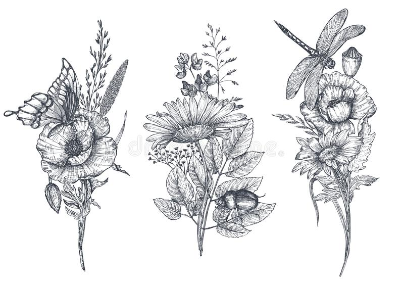 Set of three vector floral bouquets with black and white hand drawn herbs, wildflowers and insects royalty free illustration