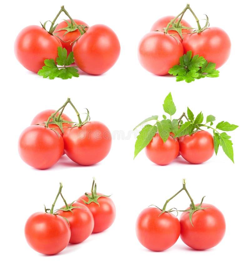 Download Set tomato fruits stock photo. Image of harvest, beautiful - 14649146