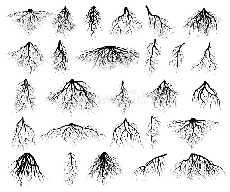 Set of tree roots stock illustration