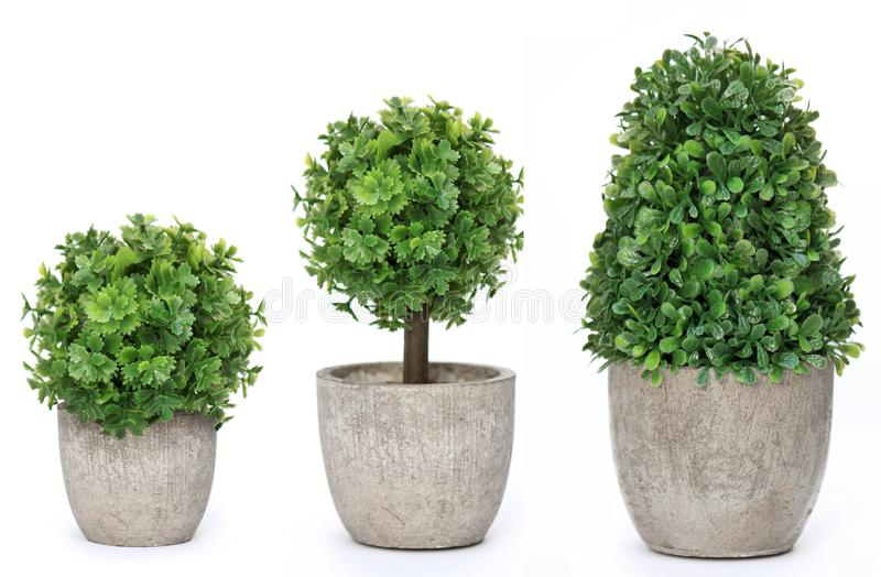 Set trees that decorate the room. Pot fake plant isolated on white stock image
